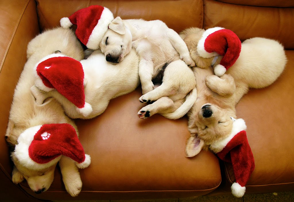 Christmas Puppies Sleeping