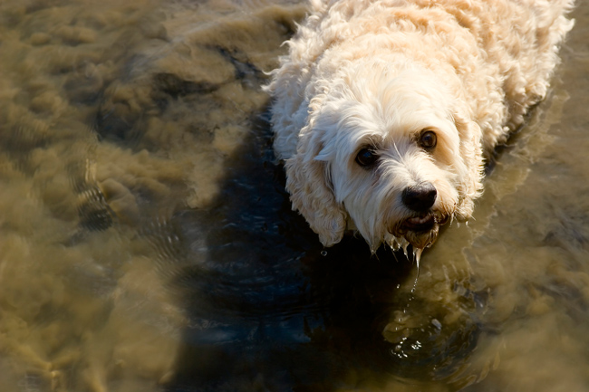 Dog Playing In Mud Water